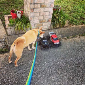 Dog sniffing toys