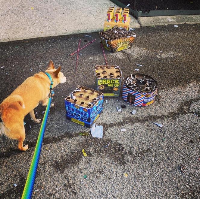 Dog sniffing trash