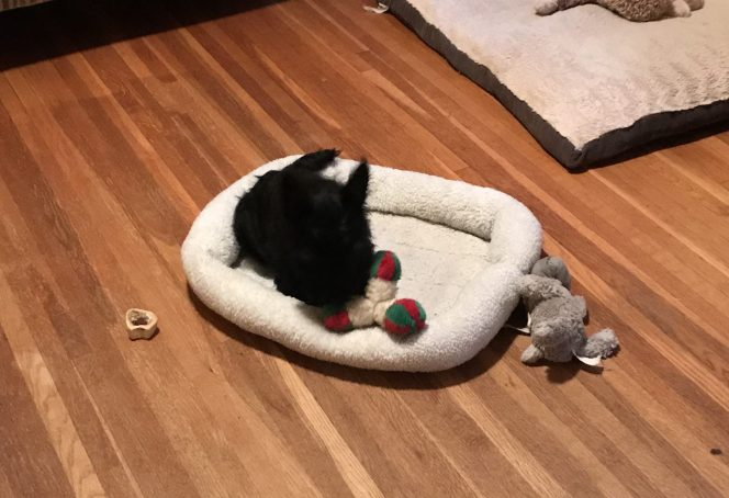JJ on his bed